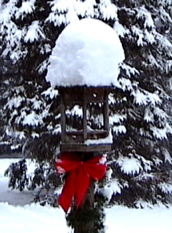 snow covered bird feeder